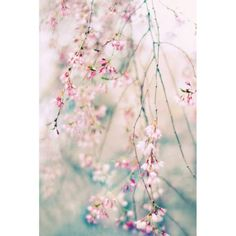 Portfolio Canvas Decor Weeping Cherry Blossoms by Jessica Jenney Large Canvas Wall Art, 24x36, Size: Large 33 inch-40 inch, Multicolor