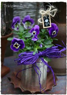 pansies in tin can    ..each table with different colored plant & will go home with a family memeber at the end of night