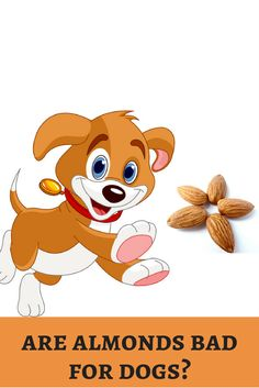 We all love nutty icecreams. But, is nuts safe for our dogs? Let's discuss! http://dogbabe.com/are-almonds-bad-for-dogs