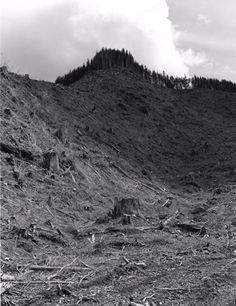 Robert Adams.  Clearcut, Humbug Mountain, Clatsop County, Oregon. 1999.  Series: Turning Back.
