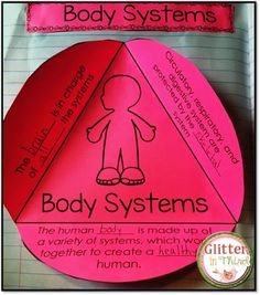 Interactive notebook resource for body systems when teaching health