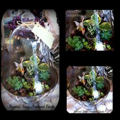 Second Time Around Finds: Past Year New Year--love this cloche terrarium what a thrifty way to bring in green during the winter