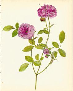 Gorgeous VINTAGE ROSE PRINT Pink Rose Antique by UpcycleFarmer
