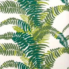 collections - ferns - greens on white
