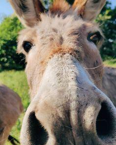 """""""Mi piace"""": 323, commenti: 28 - Gloria Di Blasi Vita su Marte (@vitasumarte_g) su Instagram: """"Io vi vedo. 😬 Ma che peccato non poter piazzare cimici e microspie per poter vedere davvero…"""" Horses, Instagram, Animals, Iphone, Mars, Animales, Animaux, Animal, Animais"""