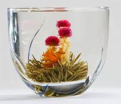 flowering in your cup