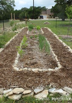 Creating a self watering garden - use drip irrigation and mulch and never water your garden again!