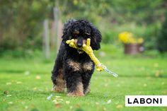 Greta Giraffe - certified premium dog toys from LABONI Dog Toys, Giraffe, Dental, Pets, Animals, Design, Dogs, Giraffes, Animales