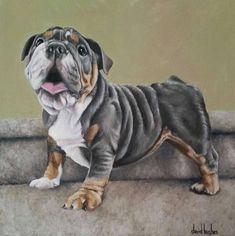 British Bulldog English Bulldog Canvas Art Acrylic Pets by David Hughes. Custom Dog Portraits, Pet Portraits, Dog Paintings, Original Paintings, Original Art, Pet Sympathy Cards, British Bulldog, Fur Babies, Dog Cat