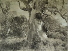 "John McCartin ""Study for Aroona Gums"" Charcoal x Landscape Drawings, Cool Landscapes, Landscape Art, Landscape Paintings, Art Drawings, Landscape Sketch, Gouache, Tree Study, Landscape Concept"