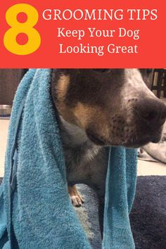 92 Best Dog Grooming Tips Images On Pinterest In 2018