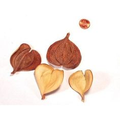 Pintado Hearts - Botanicals - Natural - Embellishments - Product Categories