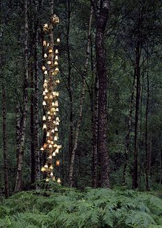 Rune Guneriussen : Norwegian artist Rune Guneriussen is working in the transition between installation and photography. As a conceptual artist he works site specific, primarily in nature and creates beautiful light installations with old lamps or books. Image Internet, Tree Lighting, Light Installation, Art Installations, Environmental Art, Light Art, Faeries, Oeuvre D'art, Forest Light