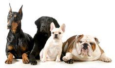 Animal Intelligence - Dogs