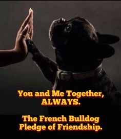 'You and Me Together, ALWAYS'...The French Bulldog Pledge of Friendship.