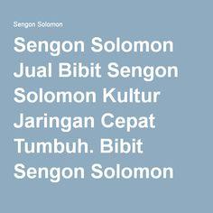 Sengon Solomon Jual Bibit Sengon Solomon Kultur Jaringan Cepat Tumbuh. Bibit Sengon Solomon yang kami jual adalah Bibit Unggul Sengon Solomon hasil dari bibit genetik unggul dikombinasikan dengan teknik perbanyakan kultur jaringan canggih