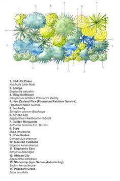 Planting scheme for a dry border. Good for Essex gardens!