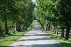 a beautiful long driveway