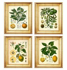 Fruit botanicals $36 etsy