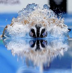 Michael Phelps pendant le 200 m individuel 4 nages. Il a encore gagné l'or.