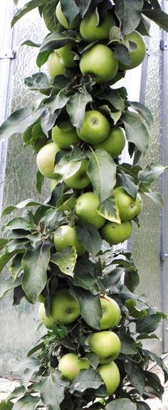 Apple, Fruit, Food, Apple Fruit, Essen, Meals, Yemek, Apples, Eten