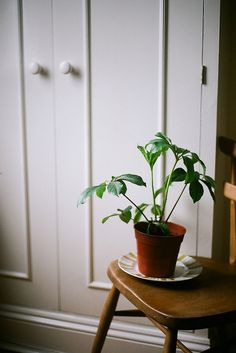 The first thing I should see in the mornings is a green leafy plant. I need to pop one next to the bed.