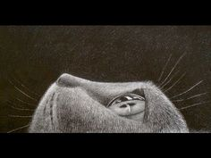 How to Draw Fur - Drawing a Cat´s Eye - YouTube
