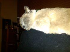 Ella es Rollie Pollie y duerme encima de mí!