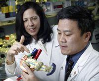 Pancreatic Cancer vaccine