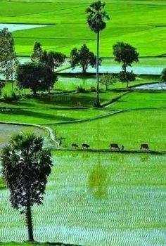 408 Best Bangladesh images in 2019 | Fotografia, Scenery, Kerala