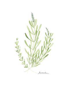 Flower Print - Lavender on Etsy, $25.00
