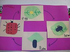 This week, we talked about patterns. We looked at patterns in animal life cycles. We used Pixie to create pictures for the life cycle of t. First Grade Science, Kindergarten Science, Elementary Science, Teaching Science, Teaching Ideas, Preschool Ideas, Science Biology, Life Science, Science Ideas