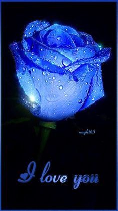Moving picture of a blue rose that says I love you. Flowers Gif, Beautiful Rose Flowers, Beautiful Gif, Love Rose, Beautiful Flowers, Love You Gif, Love You Images, My Love, I Love You Pictures