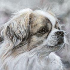 Hundezeichnung / Hundeportrait in Pastell ~ Tibetian spaniel ~ Dog painting / Dog Portrait in pastel ~ Jutta Pallasch PASTELLBLICKE