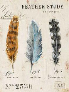 Natures Feathers Canvas Art - Angela Staehling x Feather Art, Bird Feathers, Ruffled Feathers, Fabric Feathers, Watercolor Feather, Vintage Prints, Vintage Art, Bird Art, Botanical Prints