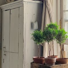 Rustic Farmhouse, Cupboard, Restoration, Sleep, Spring, Instagram Posts, Plants, Inspiration, Clothes Stand