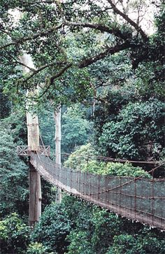 Taman Negara is Malaysia's premier national park, one of the world's oldest rainforests, with hides for wildlife-spotting, treetop walkways and treks lasting from an hour to a whole week | Rough guides