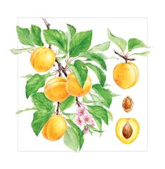 Watercolor fruits & berries on Pantone Canvas Gallery Botanical Illustration, Graphic Illustration, Apricot Fruit, Watercolor Fruit, Watercolour Art, Pop Art Design, Christmas Drinks, Art Inspo, Berries