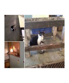 Meow Mumbai member Deepa Menon spotted these merry cats going about the day at Colaba fish market #meowmumbai
