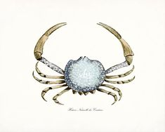 Coastal Decor Antique French Crab Natural History Art Print 8x10 Ocean Blue on Etsy, $15.00