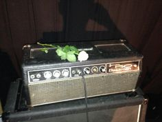 #rose #amp #tour #band