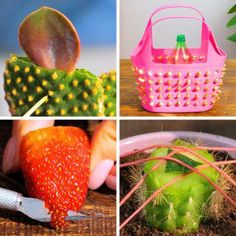 5 Minute Crafts Videos, Craft Videos, Easy Garden, Garden Art, Kids Workshop, Growing Orchids, Beautiful Nature Scenes, Diy And Crafts, Paper Crafts