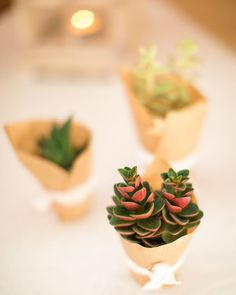 So cool to get this littles plants for you guests :D Forgot old school sweets.  #diy #plants #deco #weddingdeco #sweets #pinit