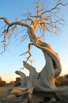 Awesome Photography (Plants and Trees) Weird Trees, Plantas Bonsai, Twisted Tree, Old Trees, Unique Trees, Nature Tree, Tree Forest, Photo Tree, Belle Photo
