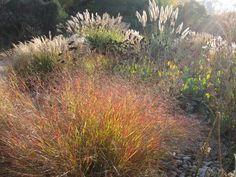 Amazing autumnal grasses