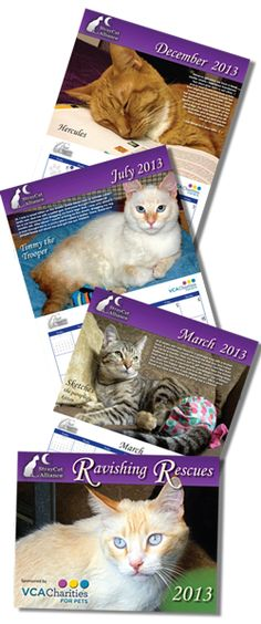 Ravishing Rescues Calendar! 12 months of beautiful rescue cats! Great for the office or a gift for the cat lover in your life! Each purchase helps our efforts in aiding cats in need and continuing spay and neuter programs in Los Angeles communities! http://www.straycatalliance.org/donate/merchandise/ravishing-rescues-calendar-order-now
