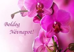 Happy Name Day, Diy And Crafts, About Me Blog, Happy Birthday, Names, Flowers, Plants, Google, Cute Love Pictures