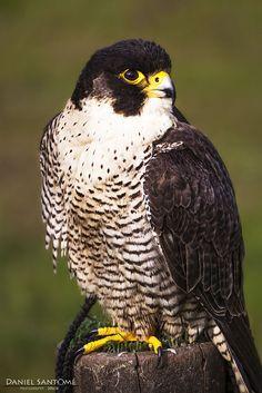 """""""Oteando el Horizonte"""", fotografía de una de las especies de aves rapaces que se pueden observar en el Parque de la Naturaleza de Cabárceno."""