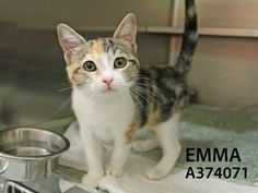 Adopted! Emma has found her forever home! 9/2/15