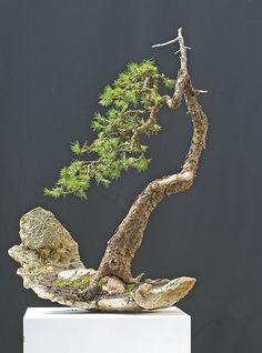 Bonsai Gallery of Walter Pall